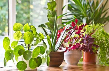 House plants on the window. House plants display.