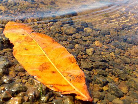 Bladeren in water Stockfoto