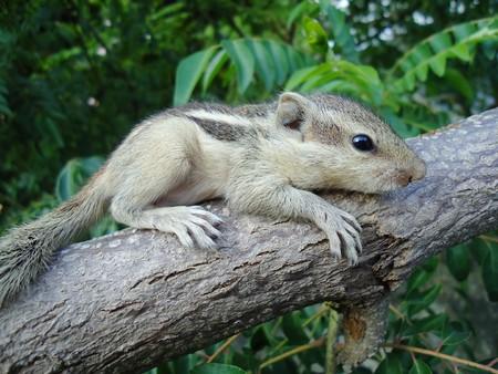 sharply: baby squirrel is sharply watching something