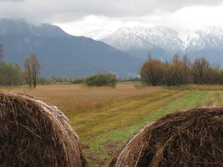 moor: Germany Bavaria Bayern Murnau Moor Alps Stock Photo