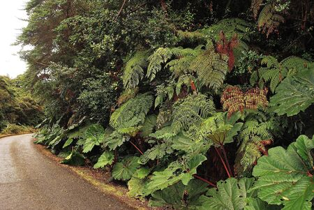 vicinity: Costa Rica, vegetation in the vicinity of the volcano Post