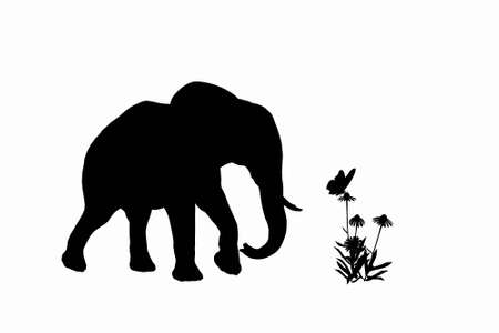 elefant and little buterfly photo