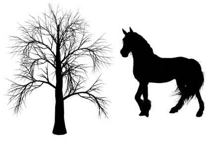 donkey tail: caballo y el �rbol Foto de archivo
