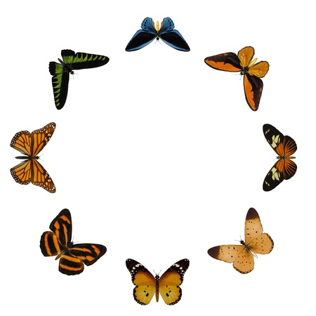 butterflies circle photo