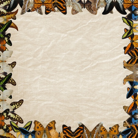 frame butterflies letter photo