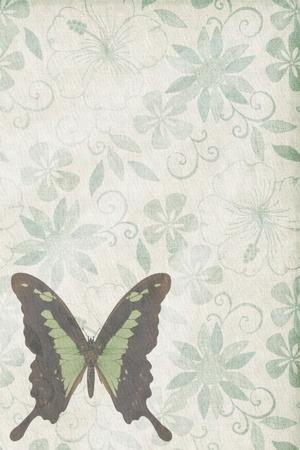 Butterflies texture letter old green photo