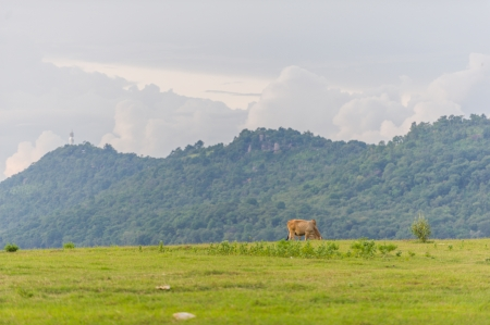 Mountain and farm in Thailand photo