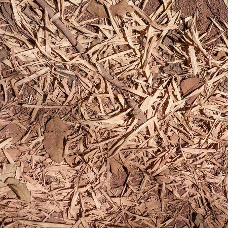 dry leaves on soil photo