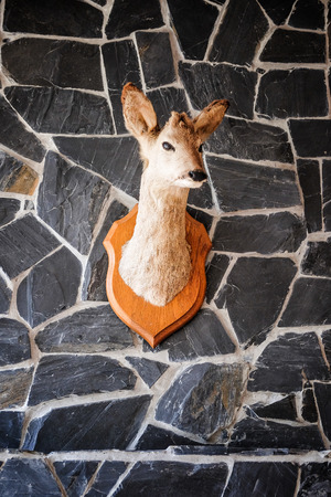 Little Head of a Deer hanging on a Wall