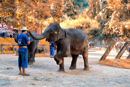 CHIANGMAI - NOVEMBER 14, 2016: Tourist enjoying the elephant shows at  Mae Sa Elephant Camp in Chiang Mai, Thailand Editorial