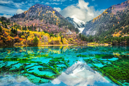 Amazing view of crystal clear water of the Five Flower Lake (Multicolored Lake) among autumn woods in  Jiuzhaigou nature (Jiuzhai Valley National Park), China. 版權商用圖片 - 83135352