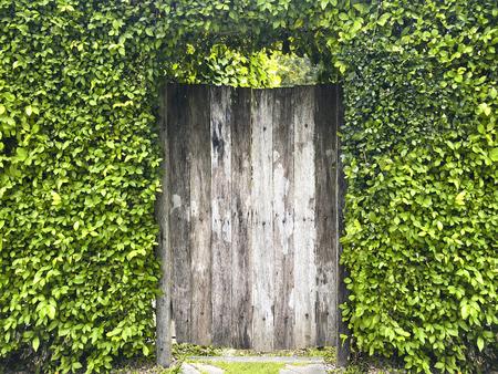 Old wood door in garden