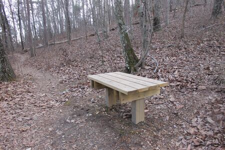 bench at the forest