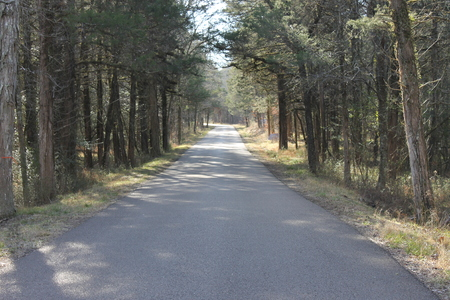 Road, trees and sunny day at the forest