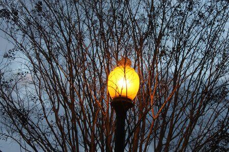 Lamp and a tree Banco de Imagens