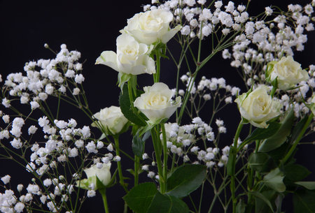 beautiful bouquet of white roses and Gypsophila paniculate