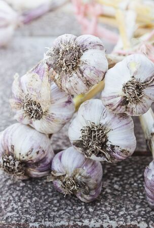 bulb and stem vegetables: Gathered garlic harvest. Bio healthy food.  Selective focus
