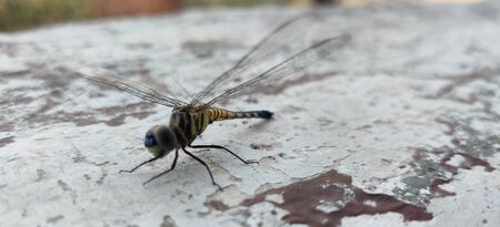 Colorful dragonfly sit on wall in summer noon