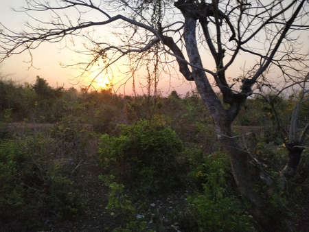 Sunset view from countryside area through trees Banco de Imagens