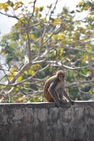 Funny looking monkey in a jungle of india Standard-Bild