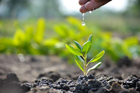 Farmer's hand watering a young plant. Earth day concept
