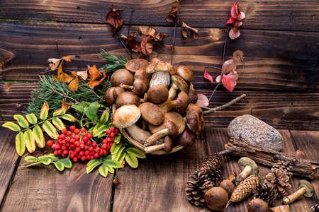 Mushroom Boletus over Wooden Background. Autumn Mushrooms. Boletus over Wooden Background, close up on wood rustic table. Cooking delicious organic mushroom.Mushroom season.Top view.