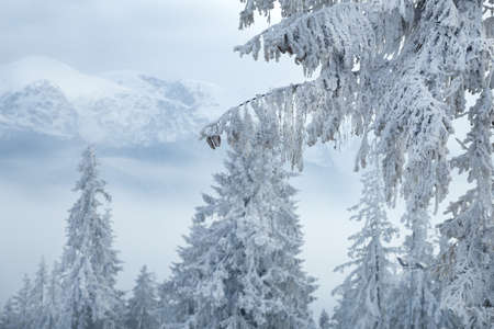 Winter mountain landscape. Karkonosze, Poland.
