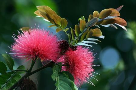 photographies: Brush flower Stock Photo