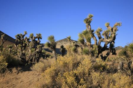 Moajave-woestijn Stockfoto