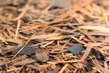 indigenous medicine: Lapacho (or Taheebo) Incas herbal tea barks close-up