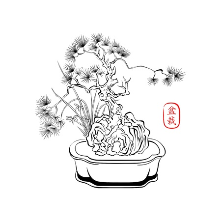 pine tree isolated: Ink styled drawing of bonsai tree with iris flowers