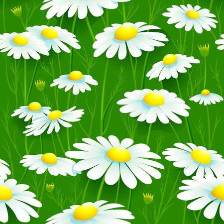camomile: Seamless summer camomile meadow pattern Illustration