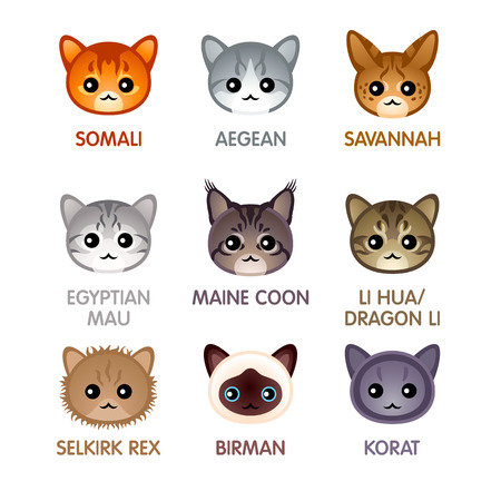breed: cat breed head icons Illustration
