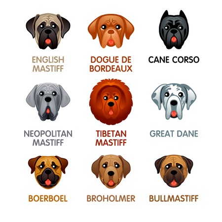Cute colorful mastiff dog head icons, vector illustration.