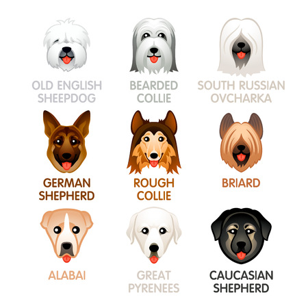 Cute colorful sheepdog and shepherd dog head icons
