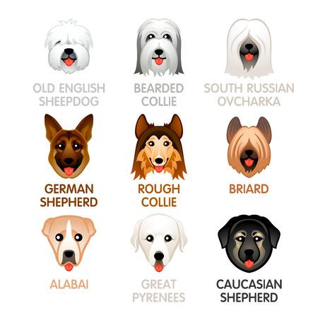 Lindo colorido perro pastor y los iconos de cabeza de perro pastor Ilustración de vector