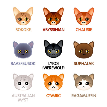 Kawaii cat new and rare breeds head icons