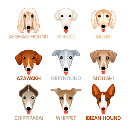 Cute colorful hound dog head icons