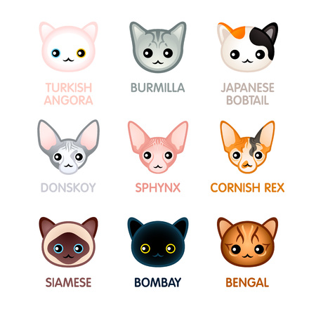 Kawaii cat breed head icons (new version)
