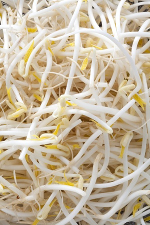 Close up of Bean Sprouts
