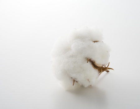 Cotton flower on a white background Imagens