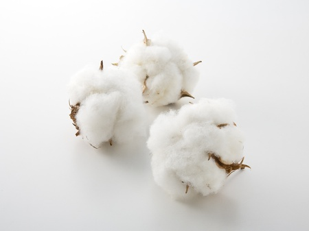 cotton ball: Cotton flower on a white background Stock Photo