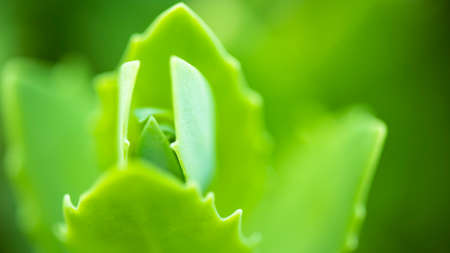 Background from delicate light green leaves. Blurred background. Bokeh Natural natural background.