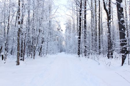 Panorama of a snow-covered path in winter wood photo