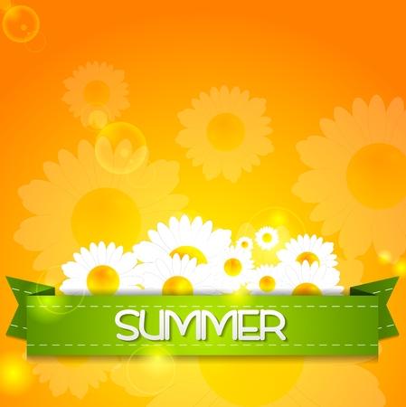 camomiles: Summer design. Camomiles and ribbon on sunshine backdrop