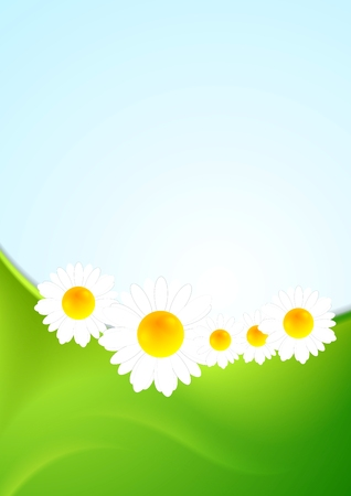 camomiles: Summer background with green waves and camomiles. Vector design Illustration