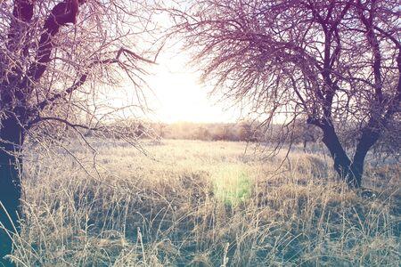 Beau paysage d'hiver avec le coucher du soleil. Rose couleurs de quartz. Occasion cru effet tonifiant de lumière douce