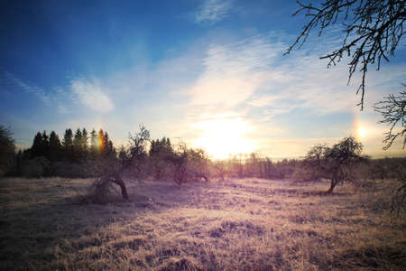 sunny cold days: Cold winter landscape with bright sunset and blue sky. Field in garden