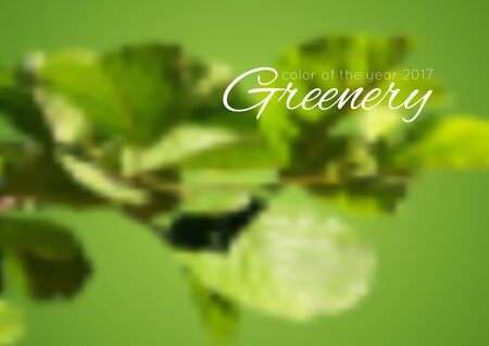 greenery: Trend color of the year 2017 Greenery background. Green summer blurred leaves vector design