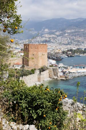 turkiye: Orange trees in sharp focus and Alanya bay  Red Tower sea and mountains blurred